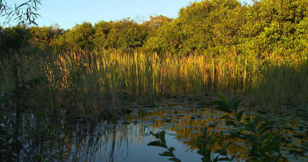 chomp fiction and florida everglades Chomp: fiction and florida everglades essay  in the florida everglades there is not much for humans there are many dangerous animals,.