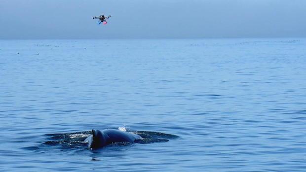 菲利普斯南极洲杀手-鲸帧-4164.jpg