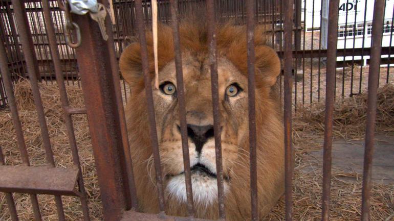 lionlifesavers-5.jpg