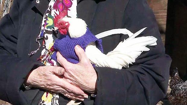 chicken-purple.jpg