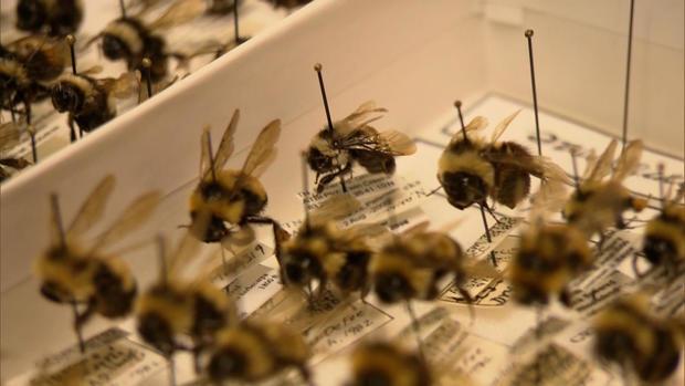 B2-斯特拉斯曼-bees.jpg