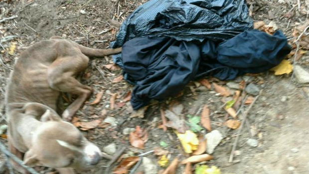 Officer charged after dog abandoned in trash bag