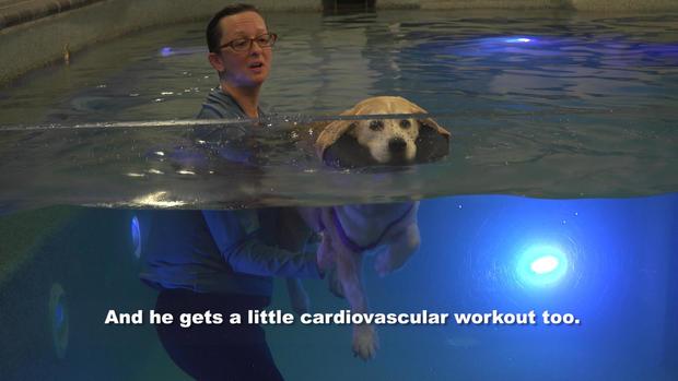 cardiovascular.jpg