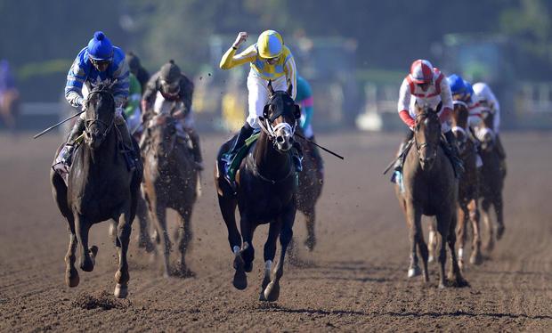 Royal Mo, Master Plan not running in Kentucky Derby