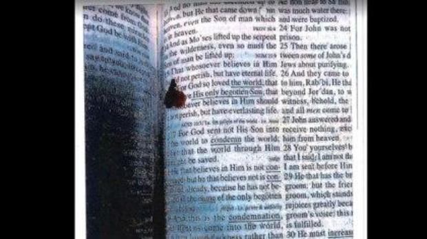 血bible.jpg