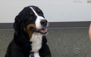 """""""Audience dogs"""" help reduce anxiety over public speaking"""