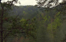 Nature: Red River Gorge