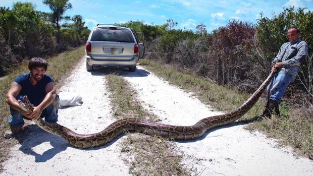 Insane snake attacks (WARNING: GRAPHIC IMAGES)