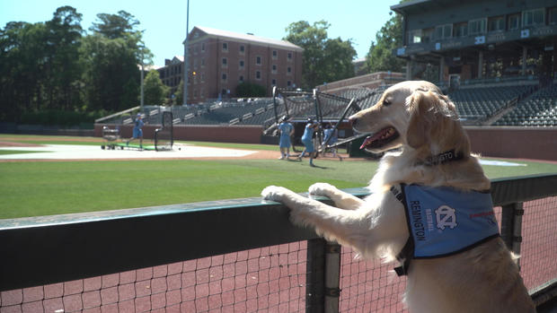A use dog in a cave during UNC baseball