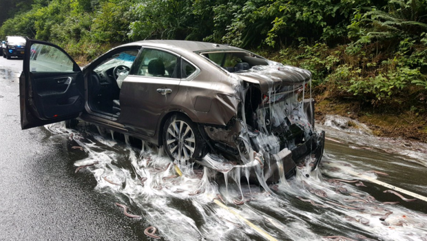 7500 pounds of live eels spill onto Oregon highway, coat cars in slime – CBS News