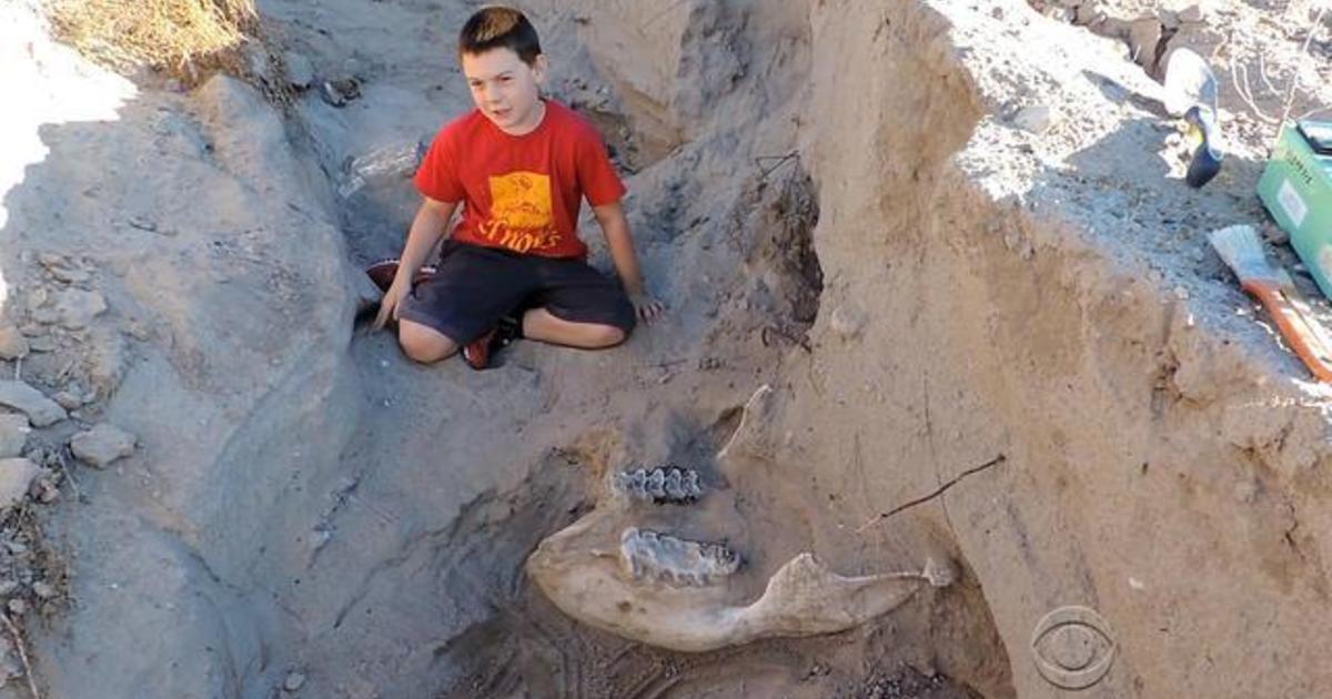 Seorang Kanak-Kanak Temui Fossil Berusia 1.2 juta Tahun Ketika Terjatuh