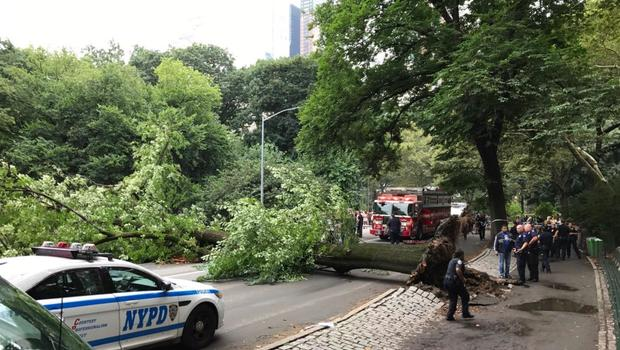 Mom, sons injured after large tree falls in Central Park
