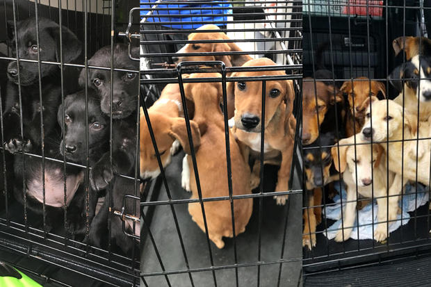 美国DOGS-动荡