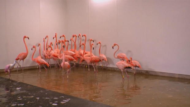 CTM-0910-飓风IRMA动物园 - 迈阿密flamingo.jpg