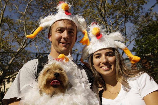 Dog costume Halloween parade in New York City
