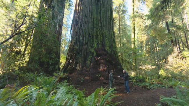 红杉森林生态学家,莱思罗普伦纳德 - 约翰 - 黑石620.jpg