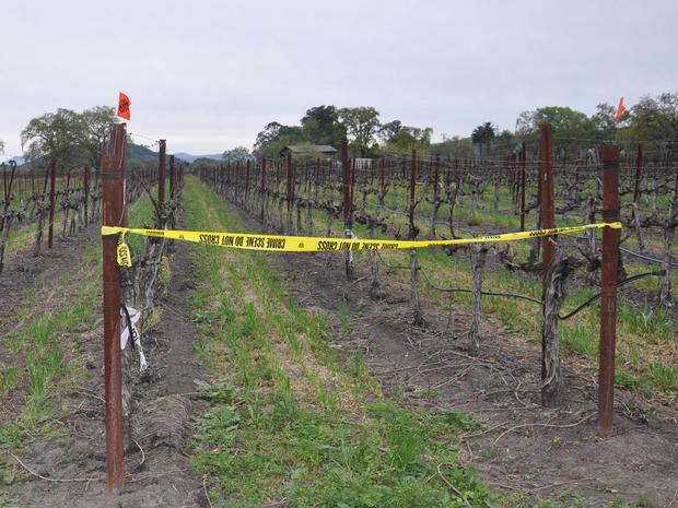 Inside Napa vineyard murder-suicide