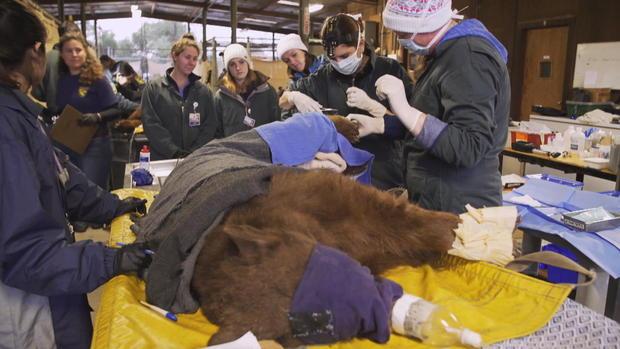 0125  - 处理 - 动物 -  yuccas熊 - 布罗尔 - 框体 -  5591.jpg