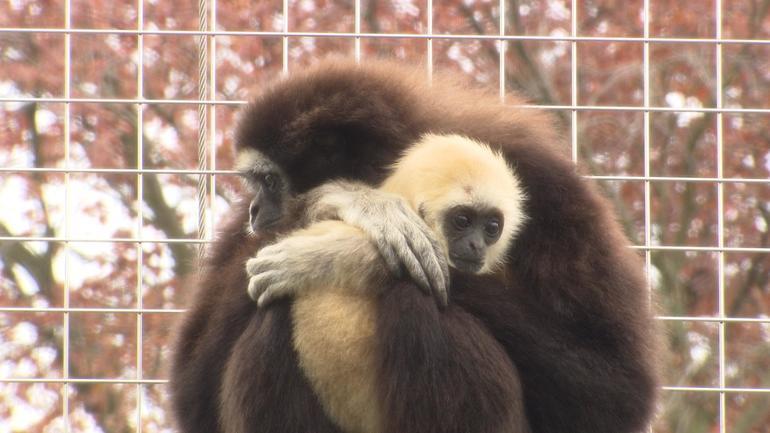 monkeys-hug.jpg