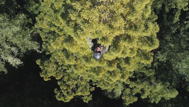 红杉-拔除锥 - 从篷-620.jpg