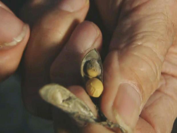 潮湿,soybeans.jpg