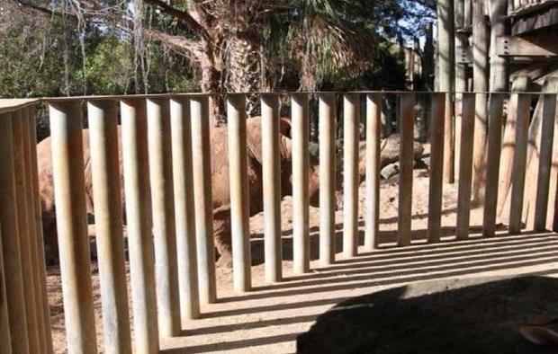 犀牛机箱-布里瓦德动物园-墨尔本-florida.jpg