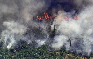 Did U.S. companies help fuel fires in the Amazon rainforest?