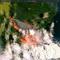 A December 31, 2019 satellite view of the Batemans Bay in Australia