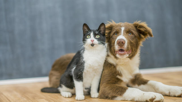Cute cat and dog portrait