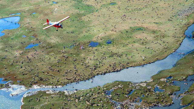 Arctic Wildlife Refuge Oil Leasing
