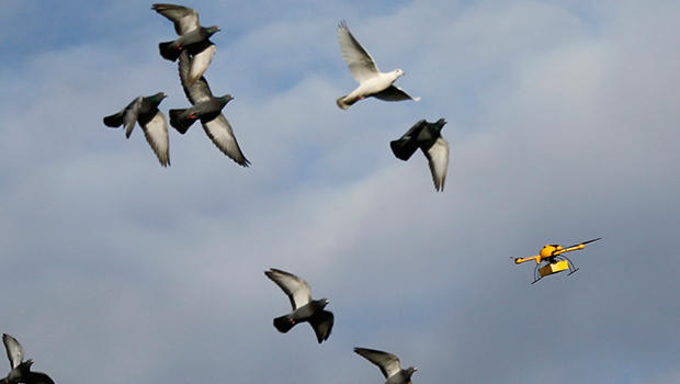 birdsanddrone.jpg