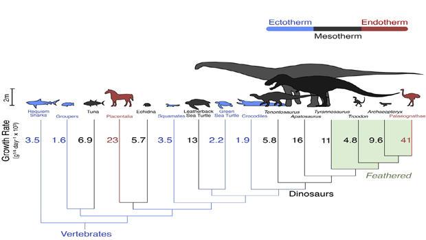 dinosaur-growth-rates620x350.jpg