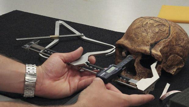 cieri-skull-measure620x350.jpg