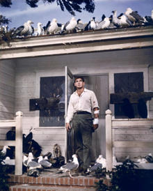rod-taylor-the-birds-220.jpg