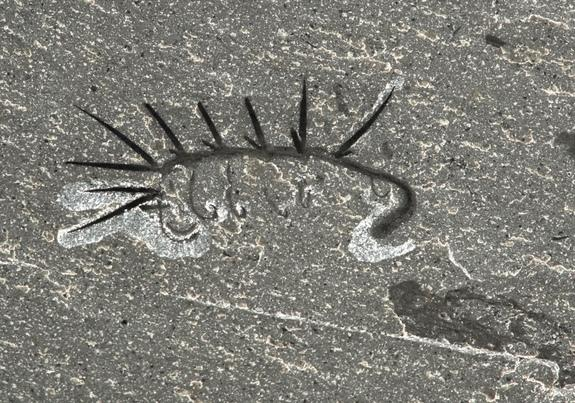hallucigenia-worm-fossil.jpg