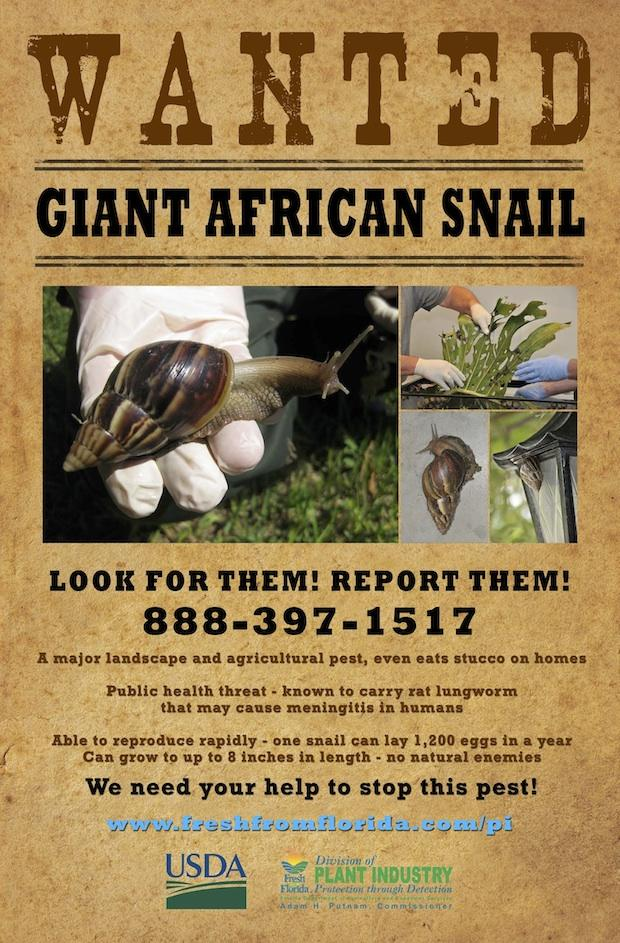 giantafricansnailposter.jpg