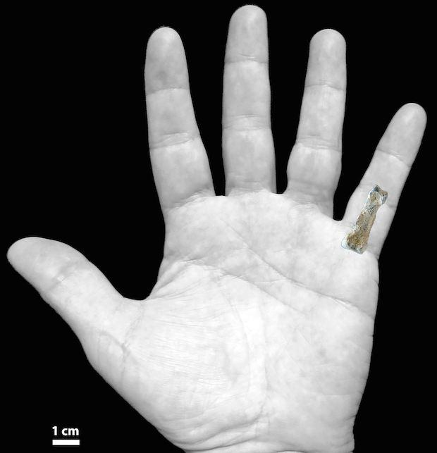 Earliest human hand bone unearthed in Africa - CBS News