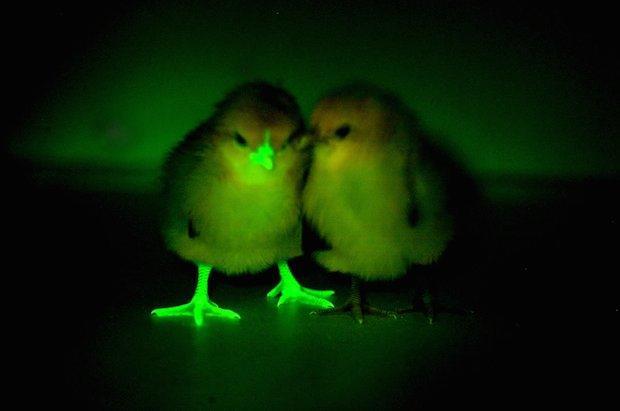 green-chickens.jpg