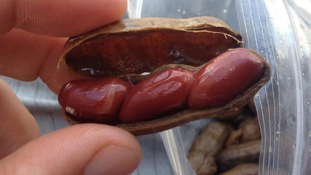 peanut-dude-boiled-peanuts-620.jpg