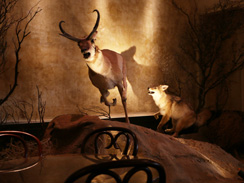 cliftons-cafeteria-taxidermy-244.jpg