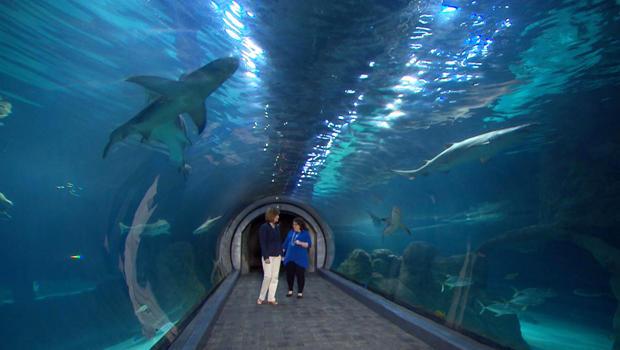 sharks-adventure-aquarium-anna-werner-nikki-grandinetti-620.jpg