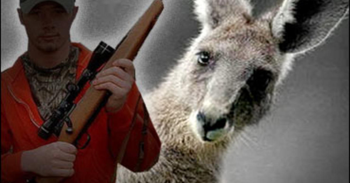 aussies hopping mad over kangaroo cull