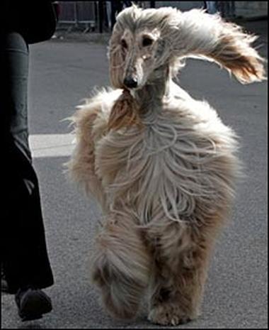 OLD VERSION Animal Instincts