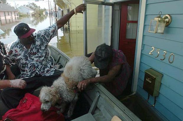 Critters And Katrina
