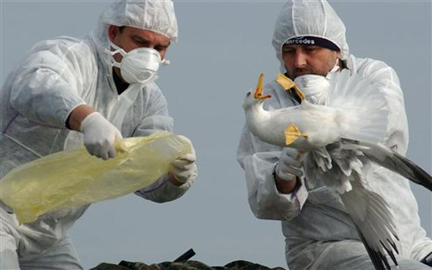 Bird Flu Spreads Across Europe