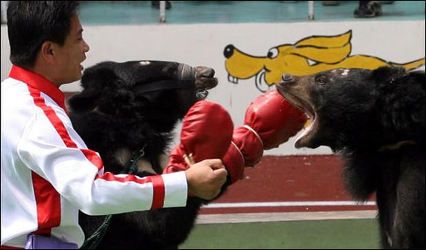 China's Animal Olympics