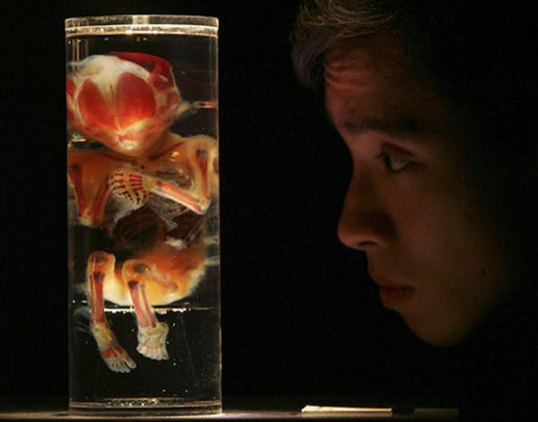 2006 Year In Photos: SciTech