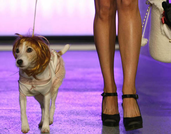 Pet Fashions