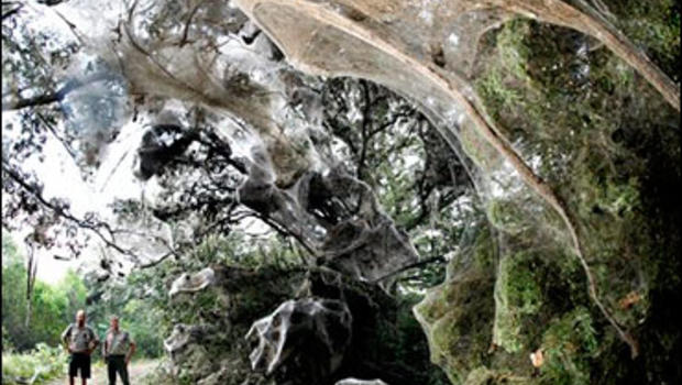 Lake tawakoni spider web