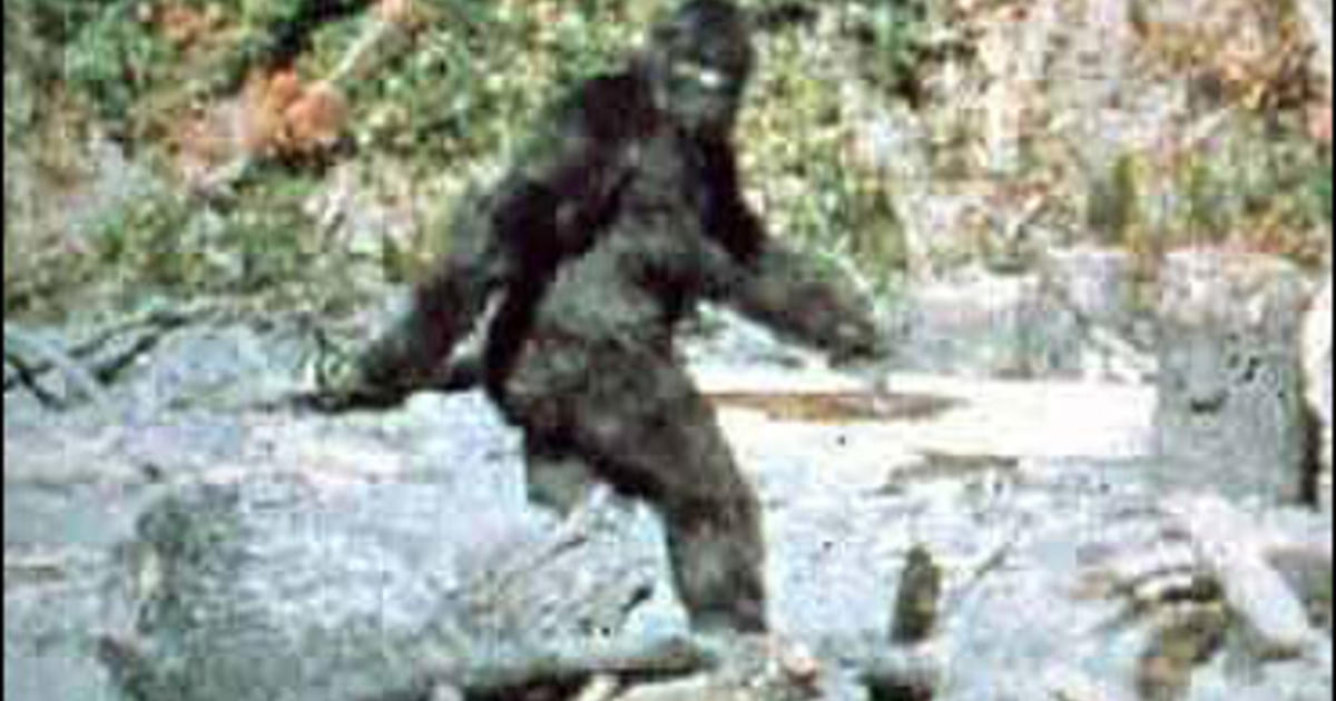 Is It Bigfoot Or Just A Mangy Bear? - CBS News